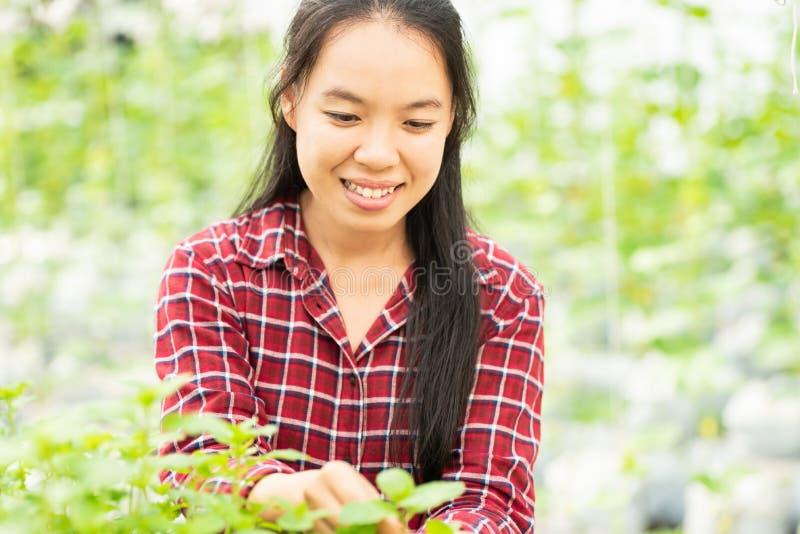 Het Aziatische vrouwenlandbouwer het plukken blad van de pepermunt royalty-vrije stock afbeeldingen