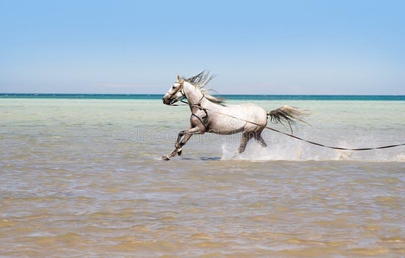 Het baden van een paard stock foto