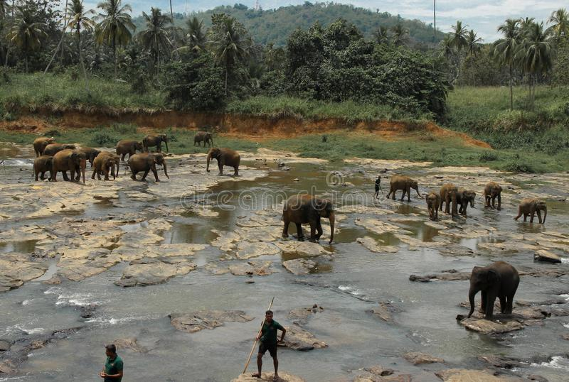 Het baden van Olifanten Sri Lanka stock afbeeldingen