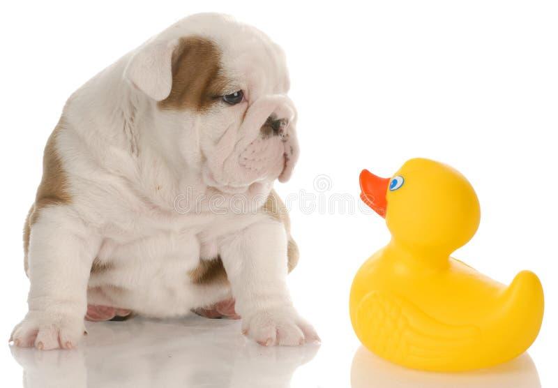 Het badtijd van het puppy stock afbeeldingen