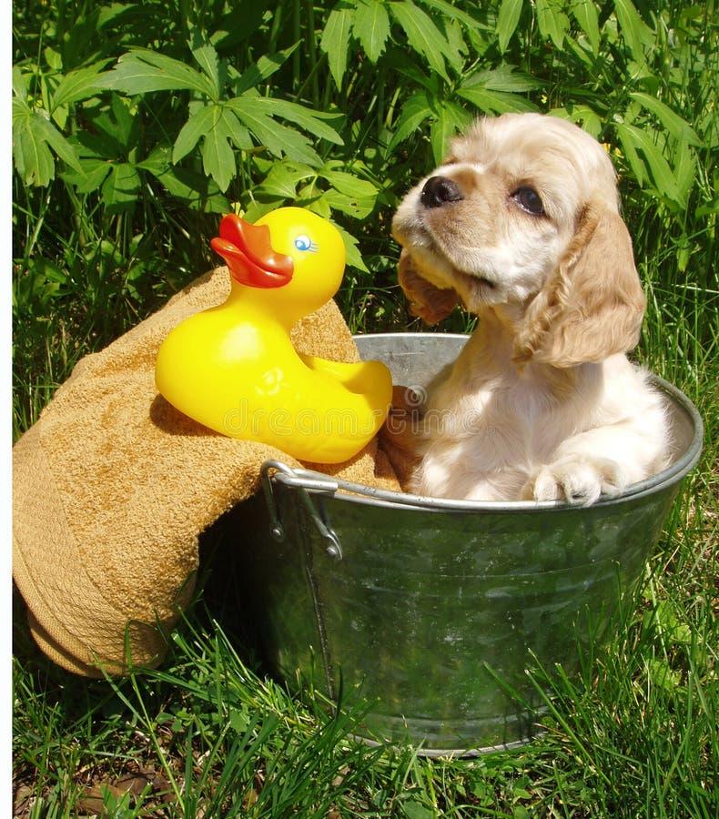 Het badtijd van het puppy royalty-vrije stock afbeeldingen