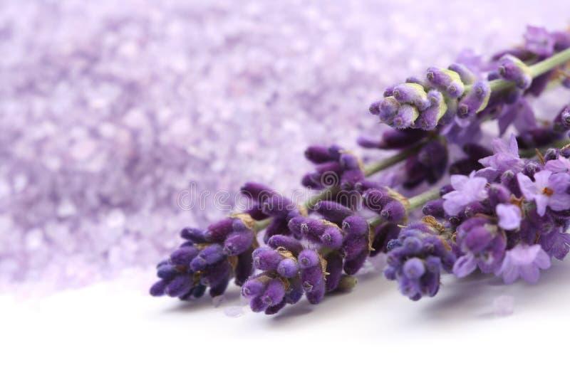 Het badzout van de lavendel stock foto