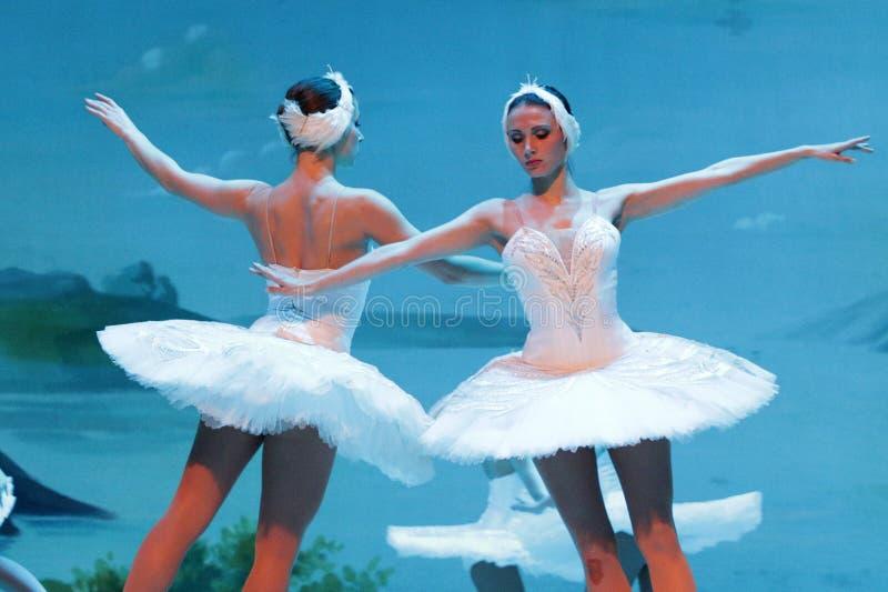 Het Ballet van het zwaanmeer op ijs stock afbeelding