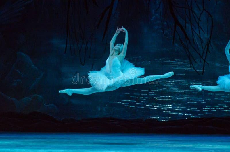 Het ballet van het Meer van de zwaan royalty-vrije stock fotografie