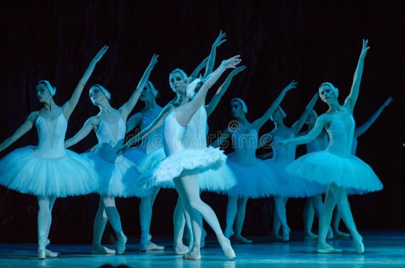 Het ballet van het Meer van de zwaan royalty-vrije stock foto