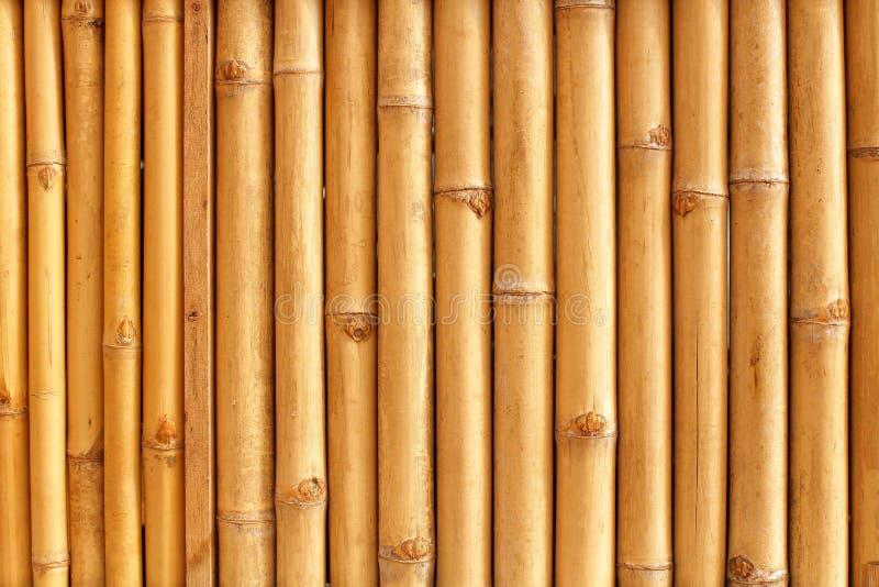 Het bamboe besluipt patroon royalty-vrije stock foto's