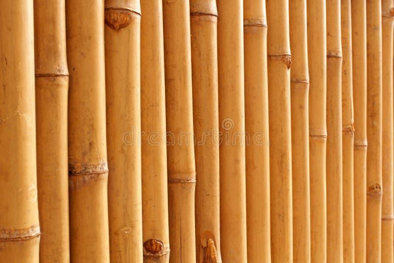 Het bamboe besluipt patroon stock afbeelding