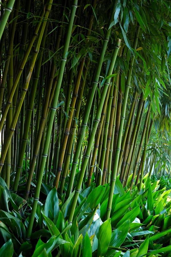 Het bamboe van stelen stock afbeelding