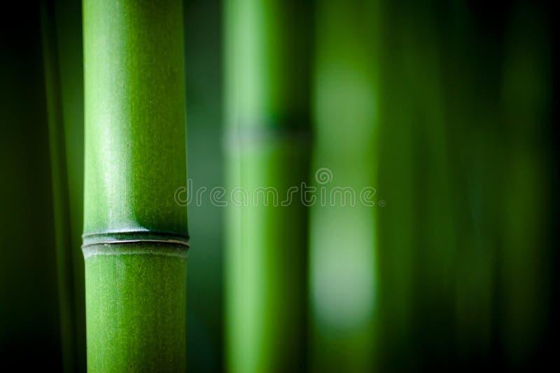 Het bamboe van Zen royalty-vrije stock afbeeldingen