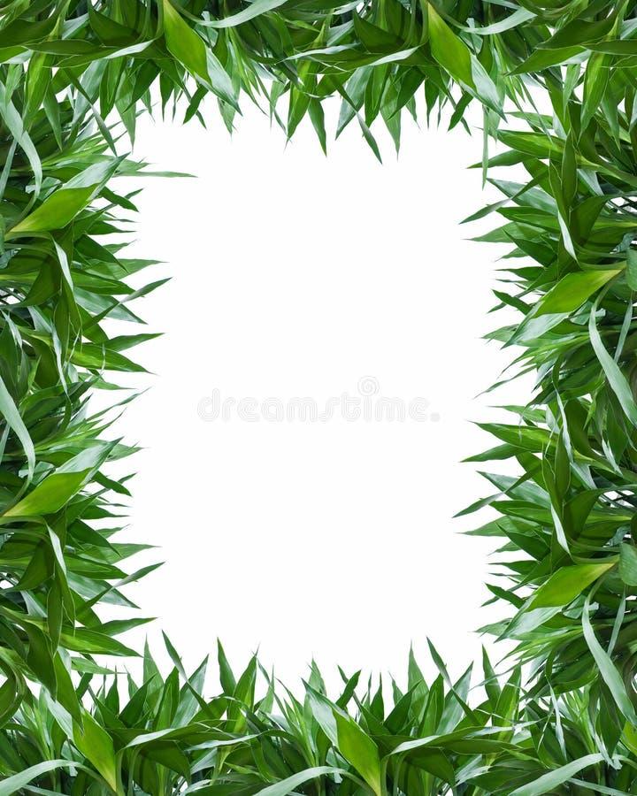Het bamboe verlaat frame achtergrond royalty-vrije illustratie