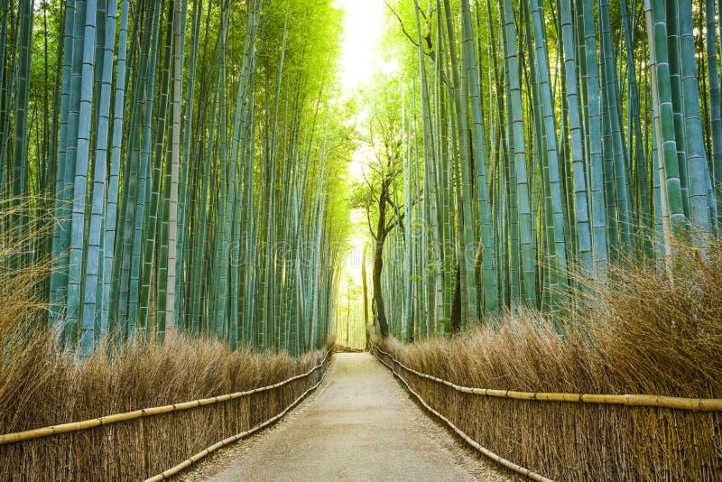 Het Bamboebos van Kyoto, Japan stock afbeelding