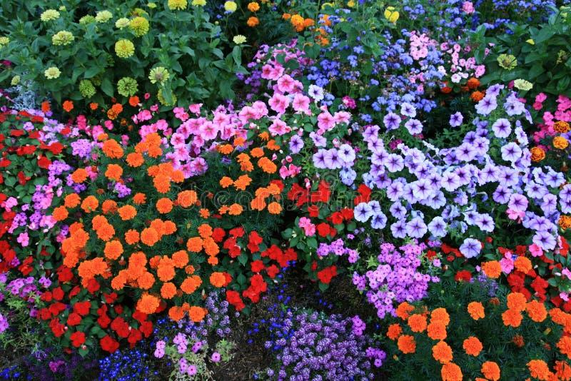 Het bed van de bloem stock foto's
