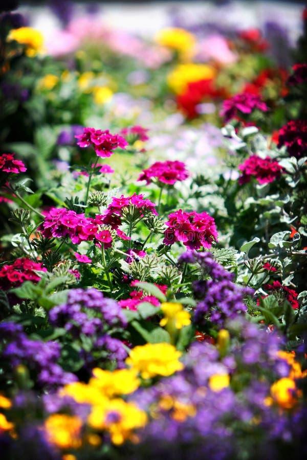 Het Bed van de bloem royalty-vrije stock afbeeldingen