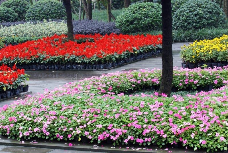 Het bed van de bloem met boom royalty-vrije stock fotografie