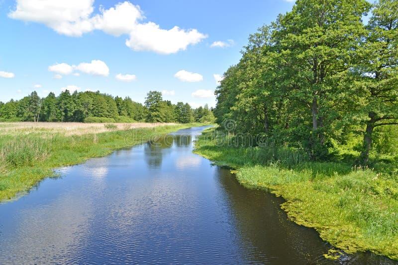 Het bed van de rivierweide in de zomer zonnige dag Het gebied van Kaliningrad royalty-vrije stock afbeelding