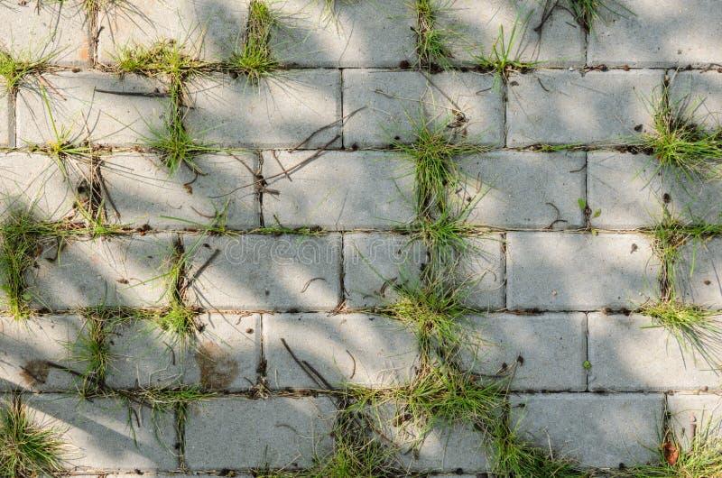Het bedekken van Voetpad met Gras stock fotografie