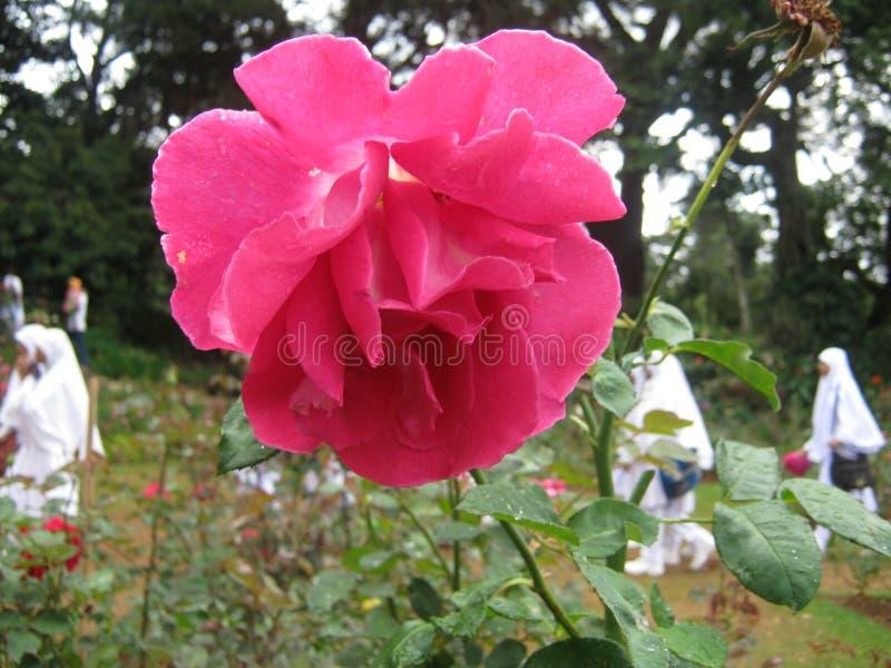Het beeld is toenam in Sri Lanka de plaats is Haggala Sri Lanka royalty-vrije stock foto