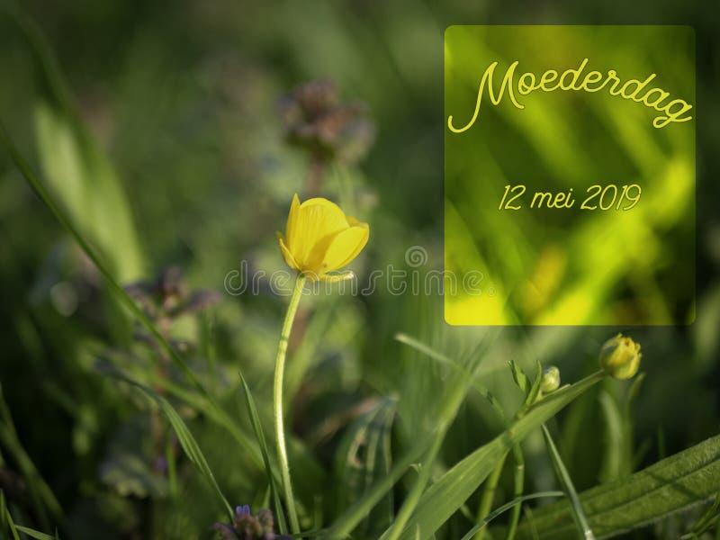 Het beeld van de moedersdag met gele boterbloemenbloem en het woord moederdag in het Nederlands royalty-vrije stock afbeelding