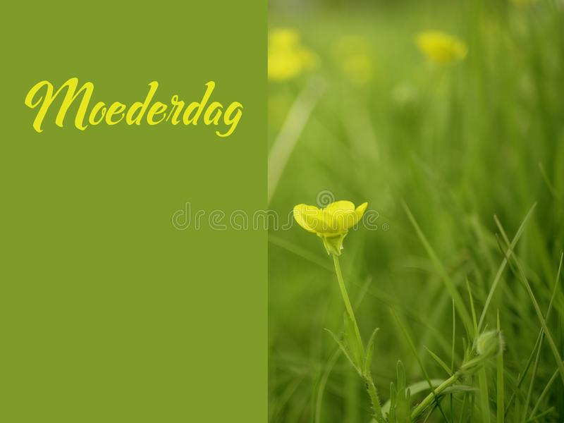 Het beeld van de moedersdag moederdag in het Nederlands met gele bloemen royalty-vrije stock afbeelding