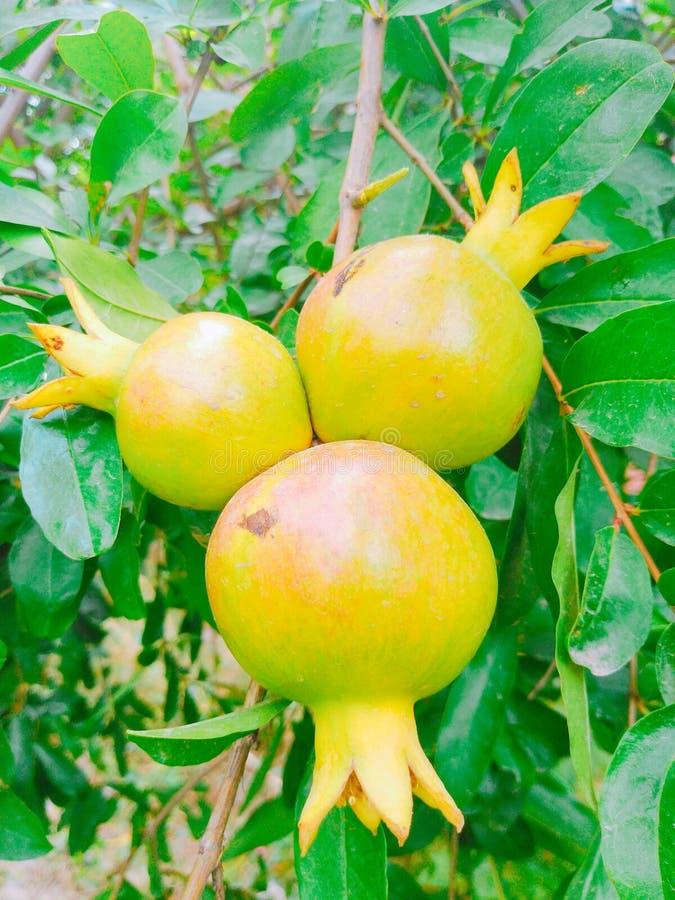 Het beeld van het granaatappelfruit royalty-vrije stock foto's