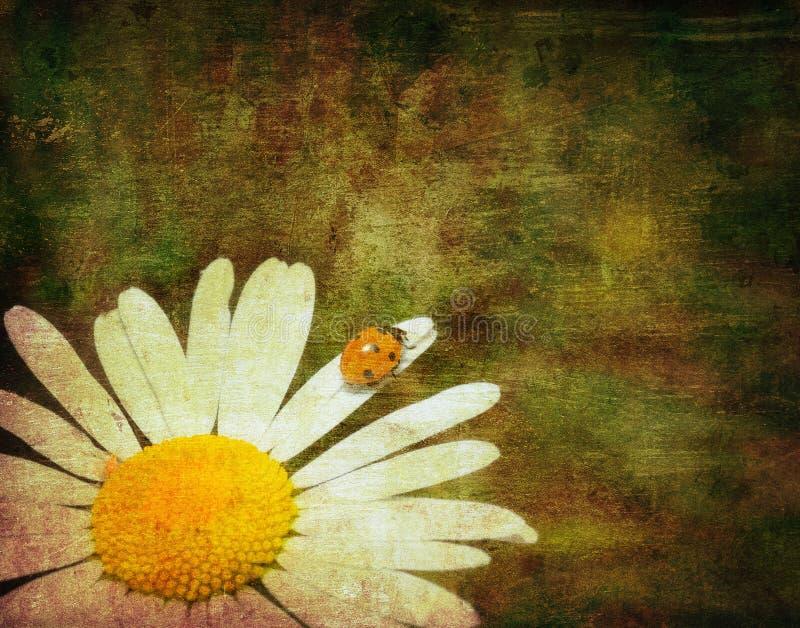 Het beeld van Grunge van een lieveheersbeestje royalty-vrije illustratie