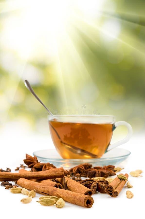 Het beeld van kop thee en diverse kruiden sluiten omhoog stock foto