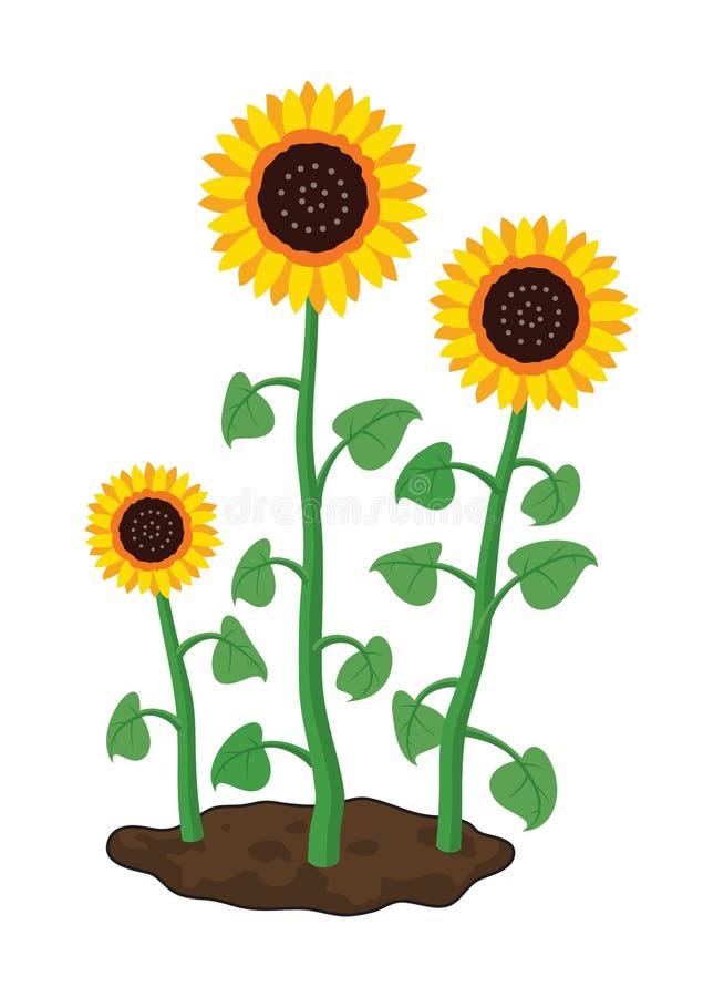 Het beeldverhaal van tuinzonnebloemen groeit in grond vector illustratie
