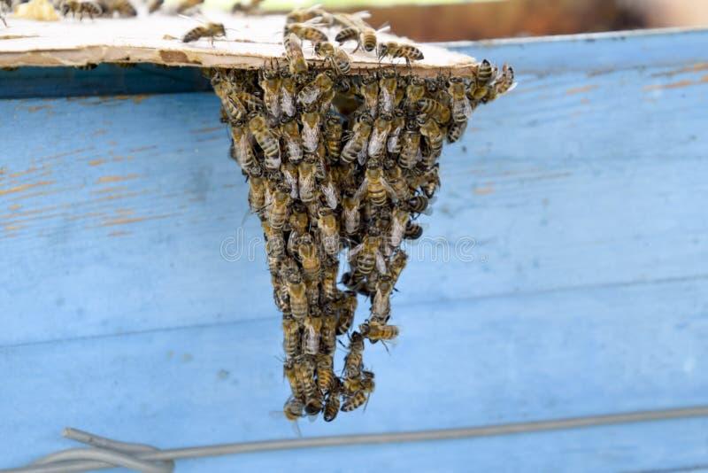 Het begin van het zwermen van de bijen Een kleine zwerm van gefascineerde bijen op kartondocument apiary royalty-vrije stock foto's