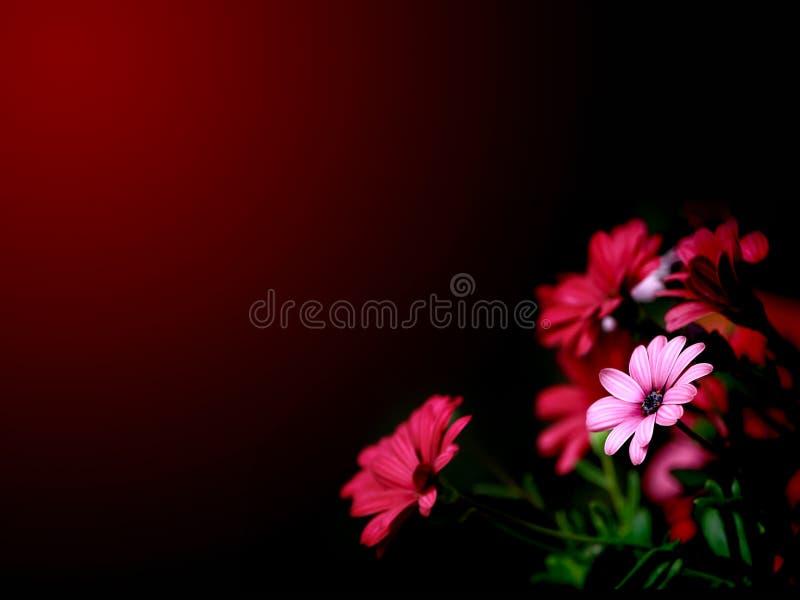 Het behang van bloemen vector illustratie