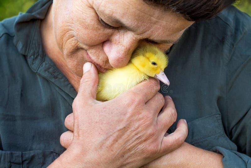 Het bejaarde heeft een kleine gele eend aan haar gezicht gebracht Liefde aan animals_ royalty-vrije stock afbeelding