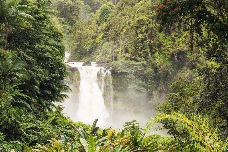 Het bekijken door een opheldering in het bos Akaka-Dalingen stock fotografie