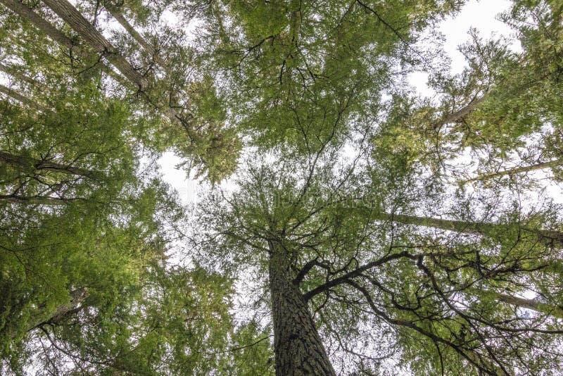Het bekijken omhoog Bomen en Hemel royalty-vrije stock foto's