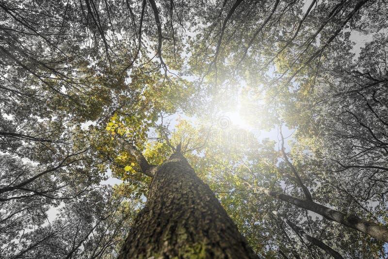 Het bekijken omhoog de bovenkant van de bomen royalty-vrije stock afbeeldingen
