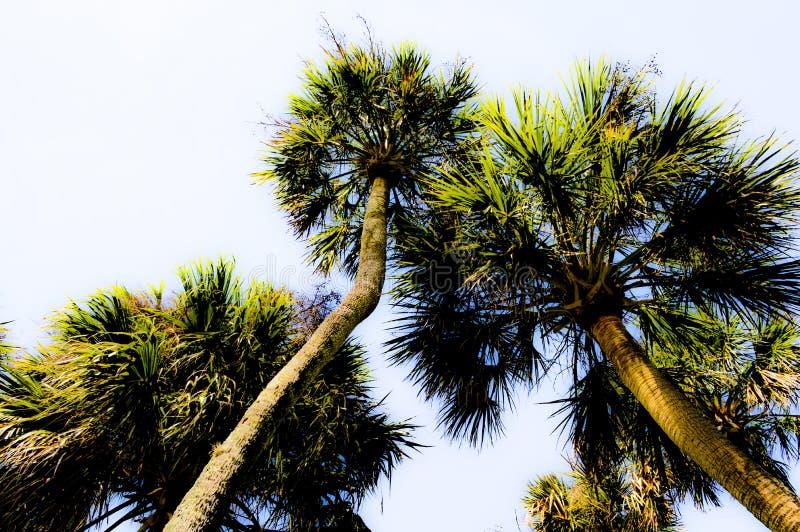 Het bekijken omhoog de gloeiende palmen royalty-vrije stock foto