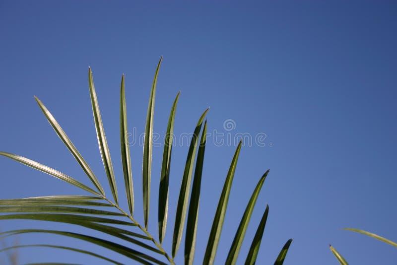 Het bekijken omhoog palmen royalty-vrije stock foto
