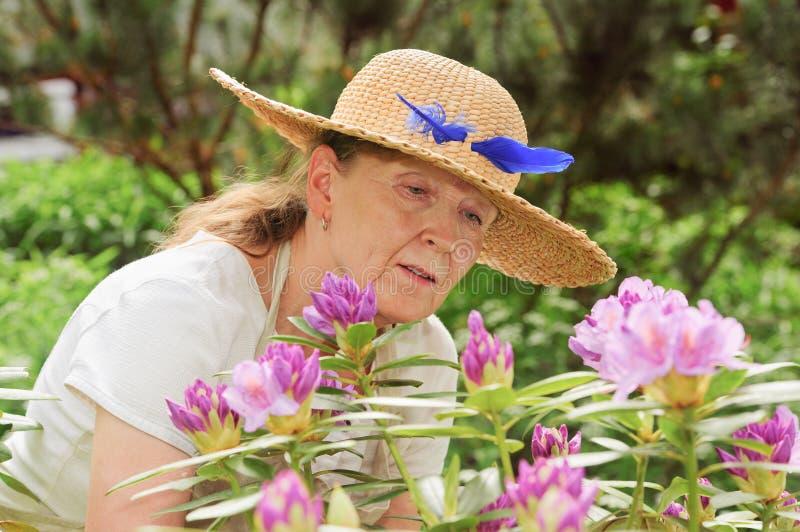 Het bekijken rododendrons stock foto