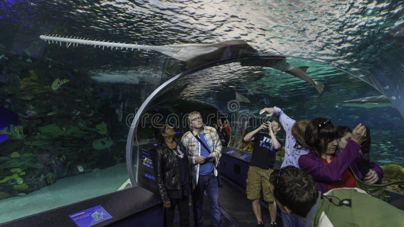 Het bekijken van de Haaitank bij het Aquarium van Toronto stock foto's