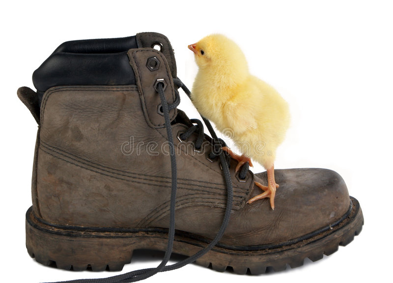 Het beklimmen van een schoen stock fotografie