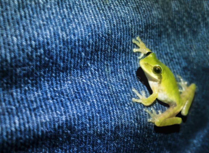 Het beklimmen van kikker stock fotografie