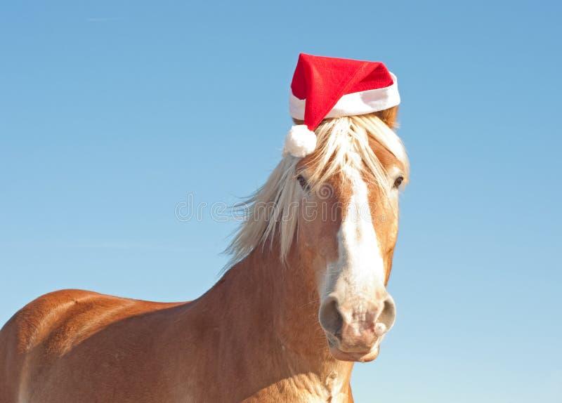 Het Belgische paard dat van het Ontwerp een hoed van de Kerstman draagt royalty-vrije stock foto