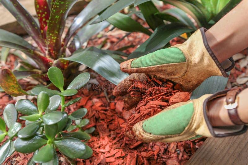 Het bemesten van de tuin met houten spaander royalty-vrije stock fotografie