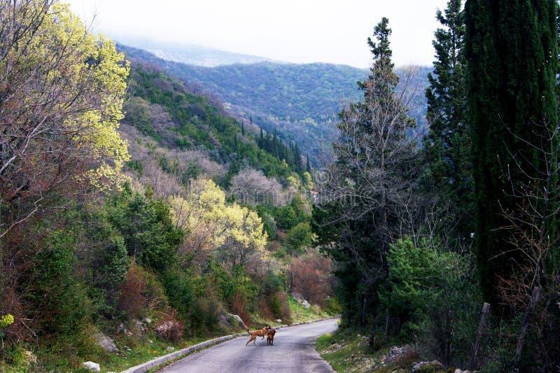 In het bergachtige bos royalty-vrije stock foto's