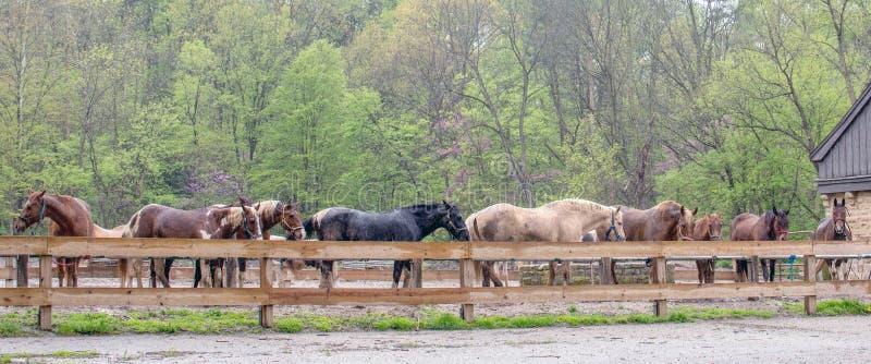 Het berijden stalpaarden in de regen stock afbeeldingen
