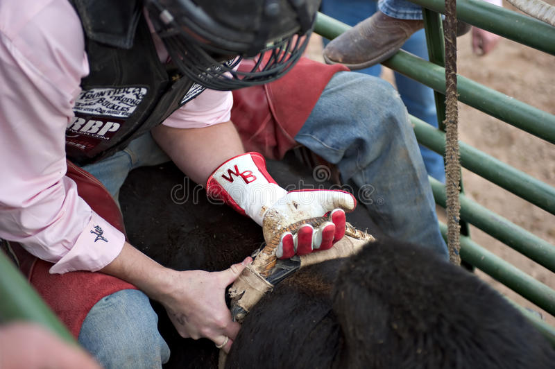 Het berijden van de stier stock foto's