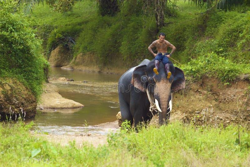 Het berijden van een olifant