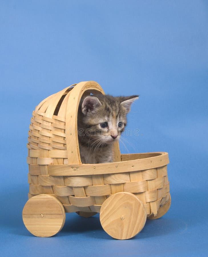 Het berijden van het katje in mand stock foto