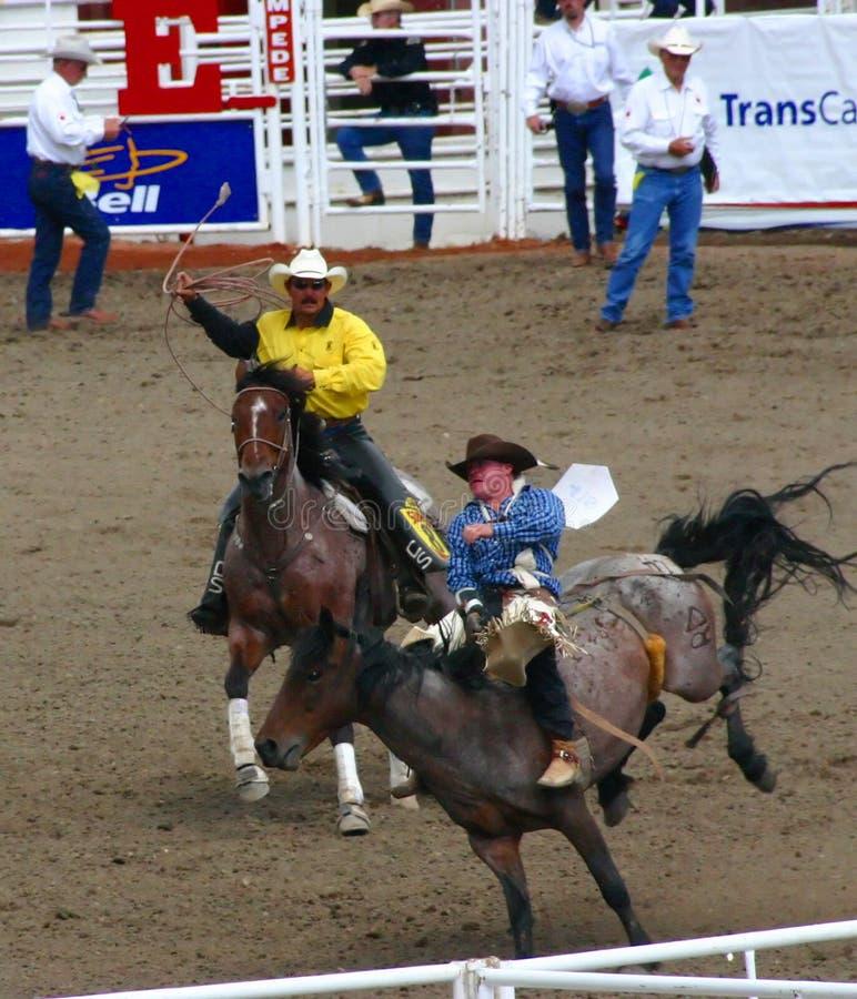 Het berijdende bucking wild paard van de cowboy stock foto's