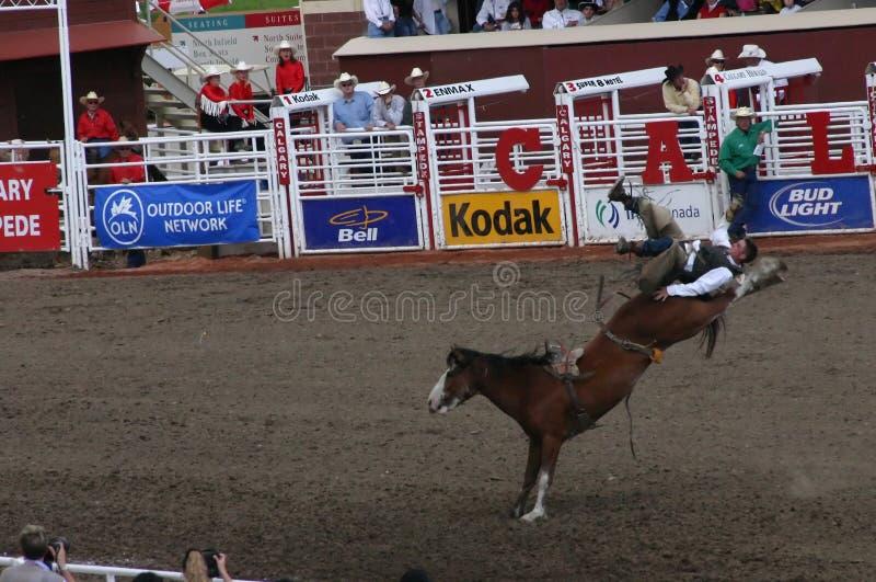 Het berijdende bucking wild paard van de cowboy stock afbeeldingen