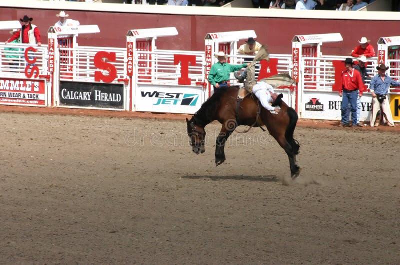 Het berijdende bucking wild paard van de cowboy royalty-vrije stock afbeeldingen