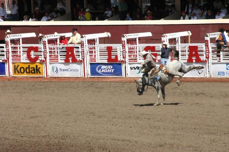 Het berijdende bucking wild paard van de cowboy royalty-vrije stock fotografie